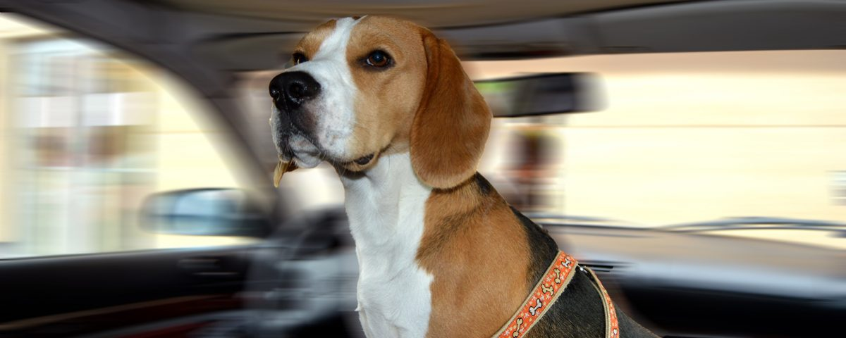 Dog-Seat-Belts-for-Cars